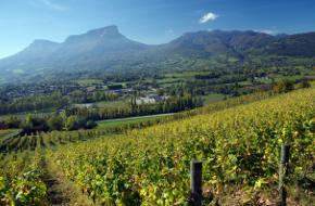 Région viticole : Jura
