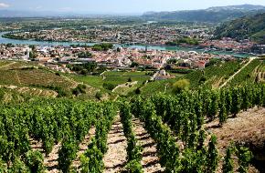 Région viticole : Rhône