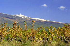 Région viticole : Provence