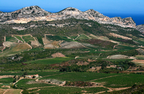 Région viticole : Corse