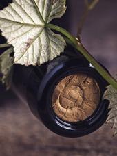 Vigneron : Domaine des Accoles