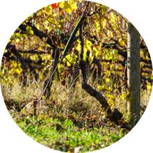 viticulture-biodynamique